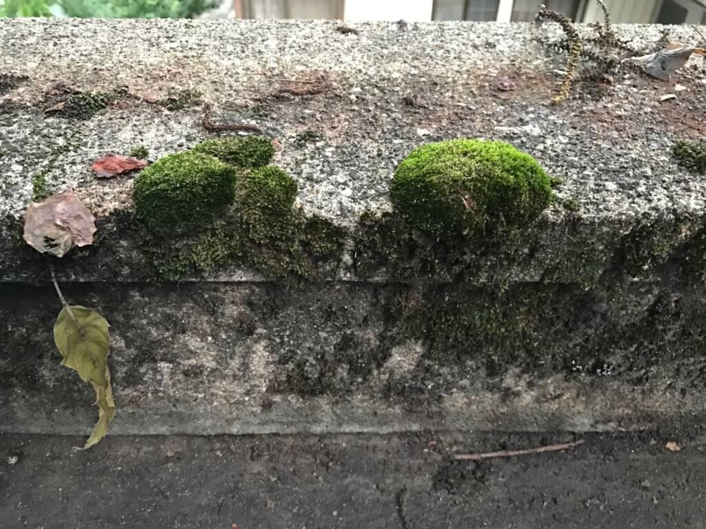 モッサリした苔群