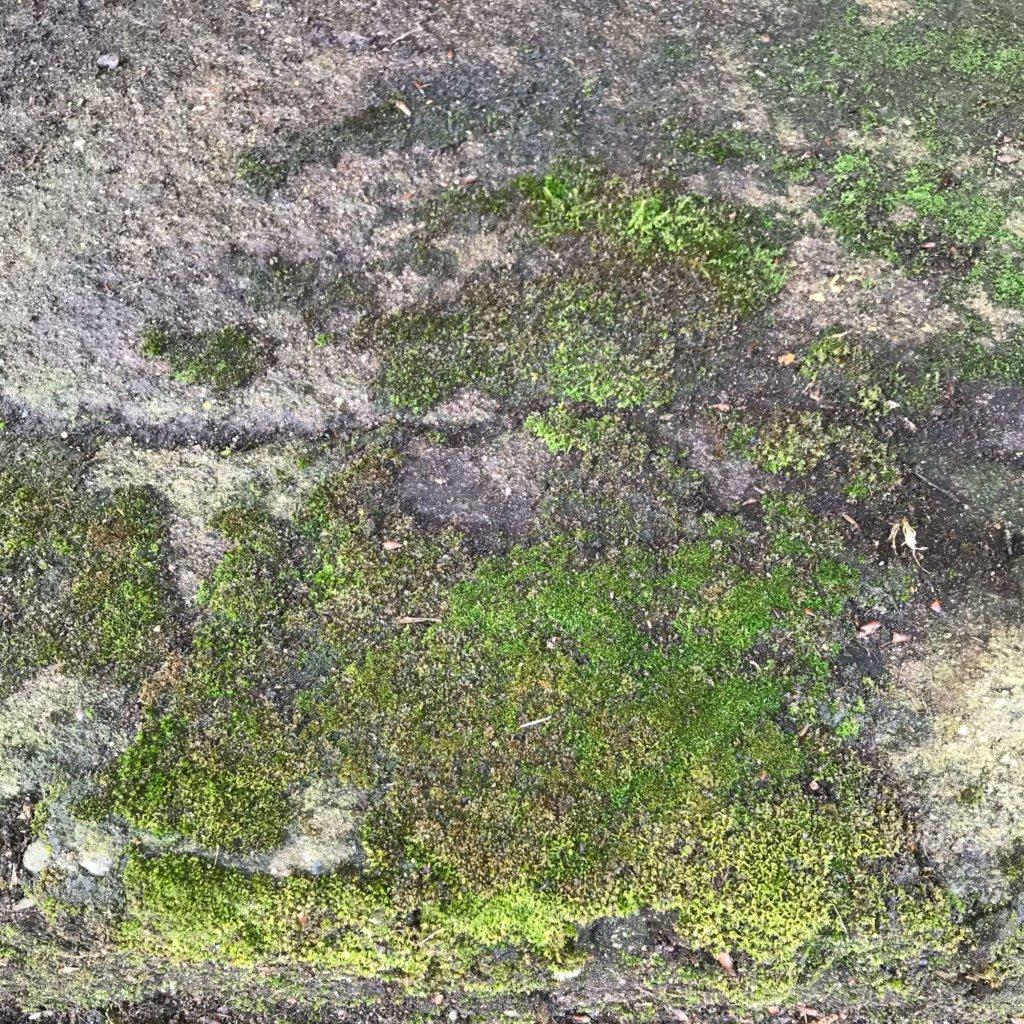 そこまで分厚くない苔が生えてます