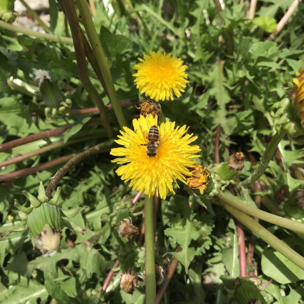2020 マップ 蜜蜂 日本 蜂 分